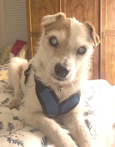 Emma - Spotlight Terrier