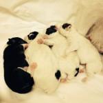 Queenie Pups